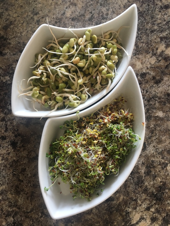 Homemade sprouts: Mungo beans and broccoli.